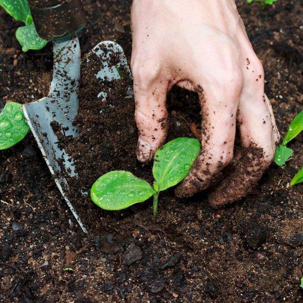 planting-mix-soil